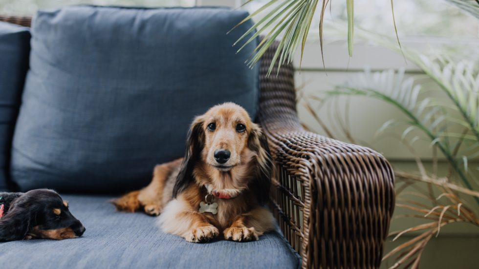 Can Dog Paralysis Be Cured?
